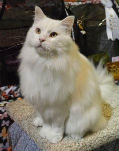 BiPolar Bear at the Cat Show