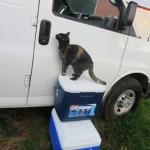 Cat-on-Coolers-Looking-in-Van