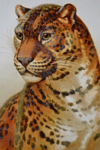 Helena Maguire's Leopard Cat